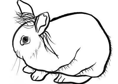 rabbit117