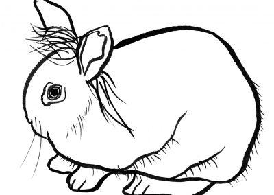 rabbit118