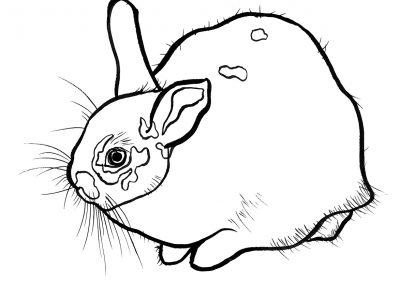 rabbit119