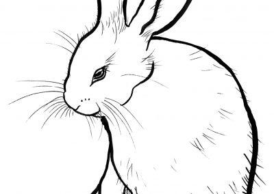 rabbit120