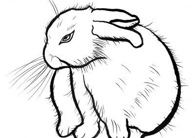 rabbit121