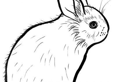 rabbit125
