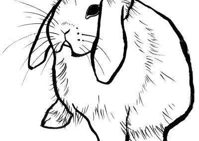 rabbit128
