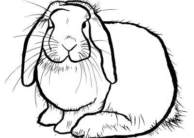 rabbit129