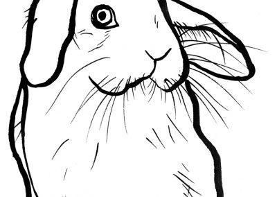rabbit131