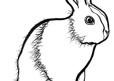 rabbit132