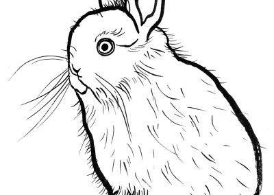 rabbit134