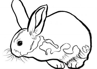 rabbit136