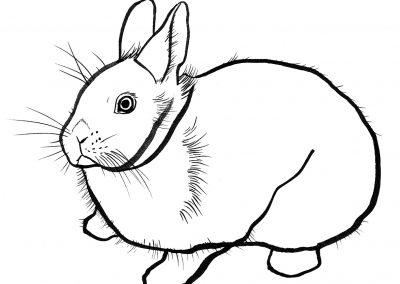 rabbit137