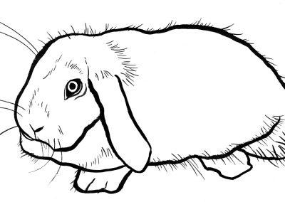rabbit138