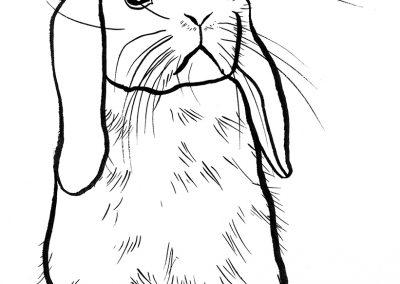rabbit139