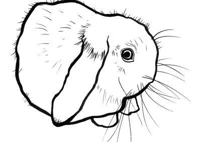 rabbit140