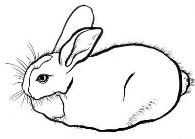 rabbit142