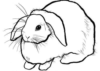 rabbit143