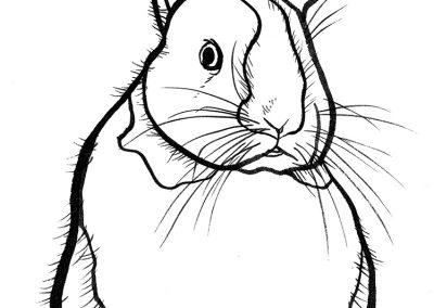 rabbit144