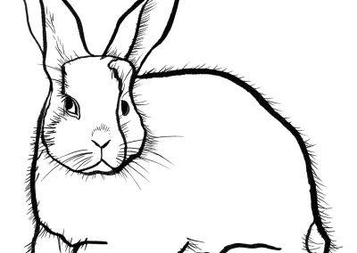 rabbit145
