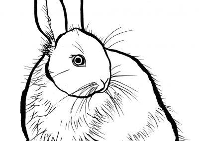 rabbit146
