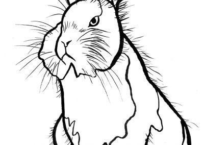 rabbit147