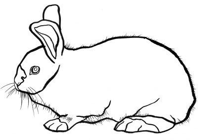 rabbit148