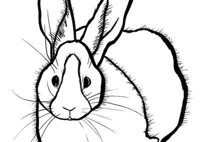 rabbit150