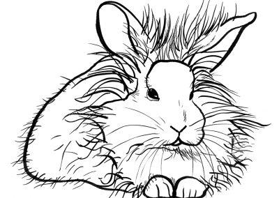 rabbit151