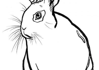 rabbit152