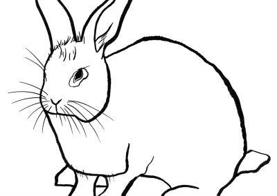 rabbit153
