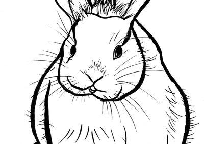 rabbit154