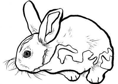 rabbit155