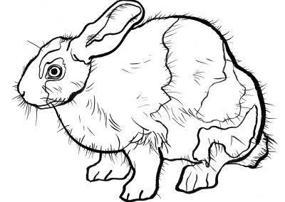 rabbit156