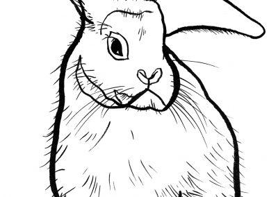 rabbit157