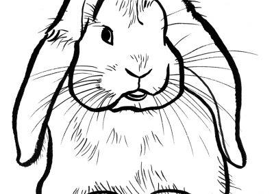 rabbit160