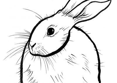 rabbit161