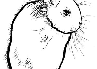 rabbit162
