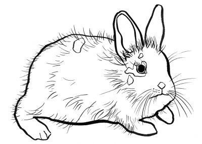 rabbit163