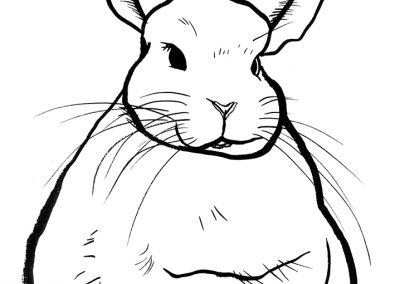rabbit164