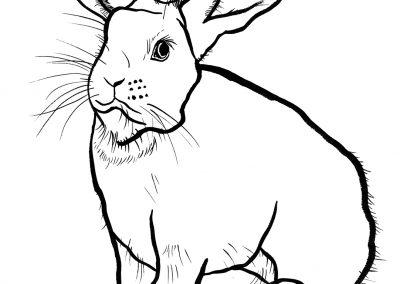 rabbit165
