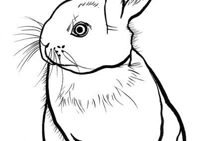 rabbit166