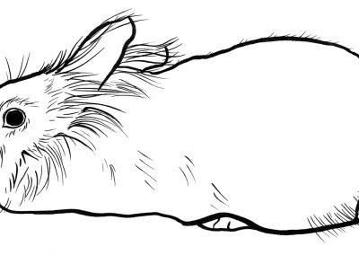 rabbit167