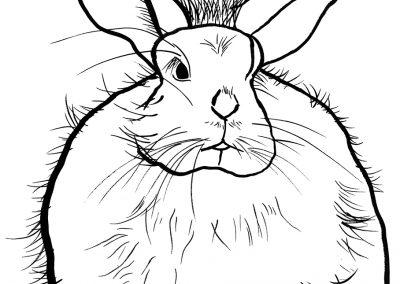 rabbit168