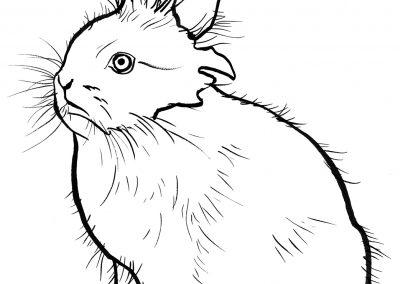 rabbit169