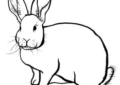rabbit170