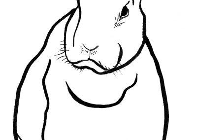 rabbit172