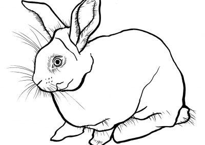 rabbit173