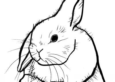 rabbit174