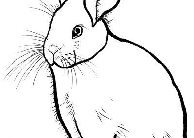 rabbit175