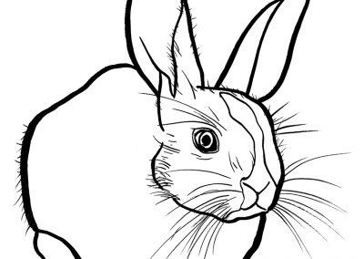 rabbit176