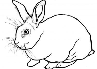 rabbit177