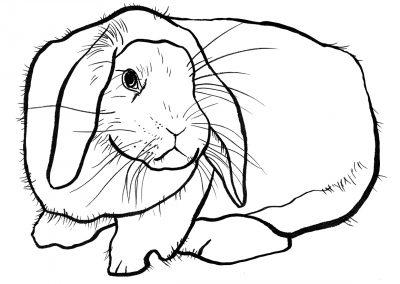 rabbit178