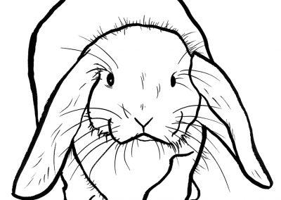 rabbit179